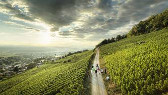 Leserwandern, 12. Etappe: Abendwanderung von Bad Zurzach nach Döttingen