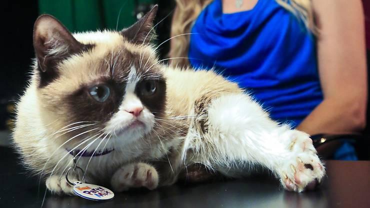 Grumpy Cat schaffte es als erste Hauskatze ins Wachsfigurenkabinett Madame Tussauds. (Archiv)