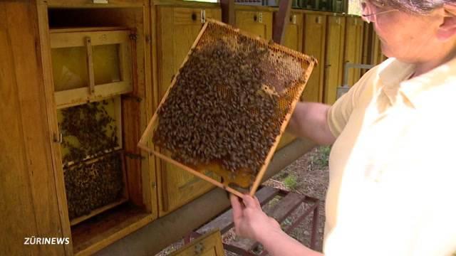 Wer klaut dutzende Bienenvölker?