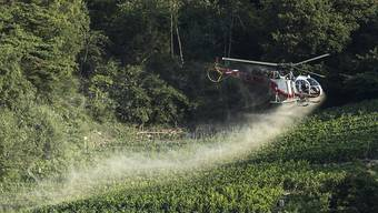 Das Mittel gegen Pilzbefall Chlorothalonil wird in der Landwirtschaft bald verboten werden. (Archivbild)