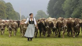 Gestörte Idylle: Barbara Scheidle treibt im Herbst während der traditionellen Viehscheid Kühe über eine Wiese bei Bad Hindelang im Allgäu. AP Photo/Christof Stache