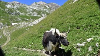 Nepal: Wunderschön, aber auch ein armes Land.