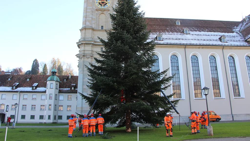 Der Christbaum ist jetzt auf dem Klosterplatz