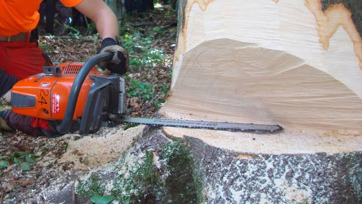 Die Stadtgärtnerei will sich zurückhalten beim Bäumefällen. (Symbolbild)