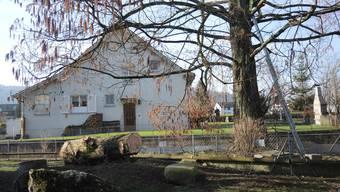 Der Mammutbaum beim Alterszentrum Mellingen-Wohlenschwil muss gefällt werden.