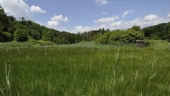 Die stark belastete Jagdschiessanlage in Embrach wird stillgelegt. Das Gelände soll wieder der Natur überlassen werden.