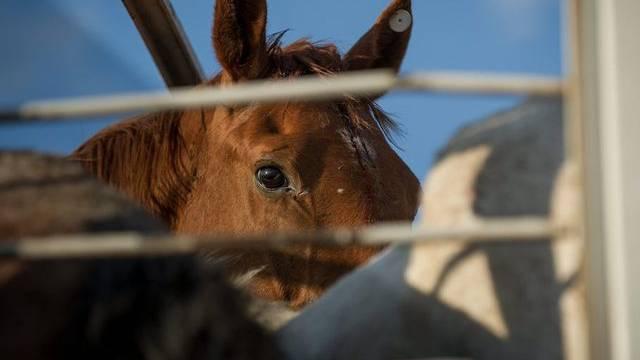 Immer wieder tauchen Fälle von nicht deklariertem Pferdefleisch auf - auch in der Schweiz