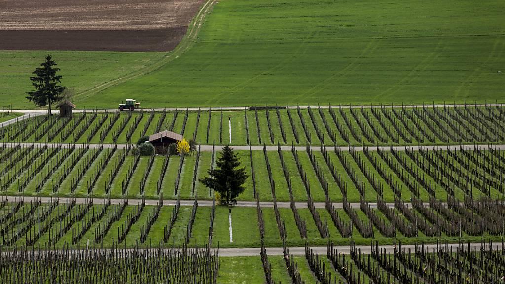 Schaffhauser Winzerbetriebe sollen ihren Wein in Zukunft auch mittels Automaten verkaufen können. (Symbolbild)
