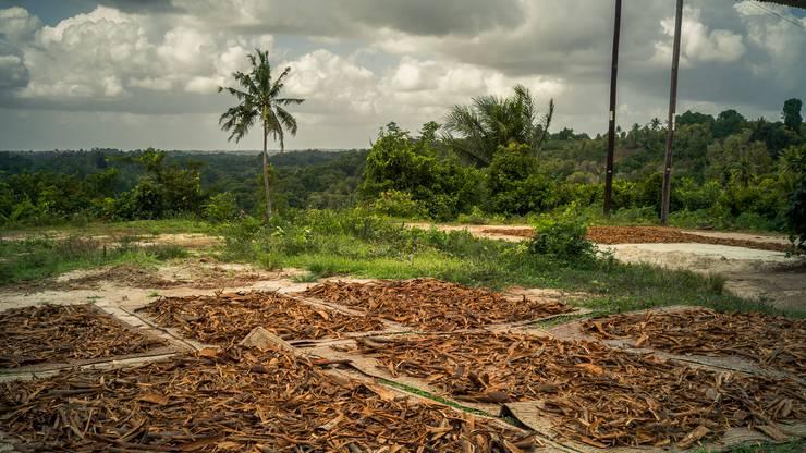 Glühweinwerk bezieht vom biozertifizierten Unternehmen 1001 Organic Gewürze wie Zimt, die auf der afrikanischen Insel Zanzibar angebaut werden.