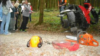 Vandalismus kommt auch im Wald vor (Symbolbild)