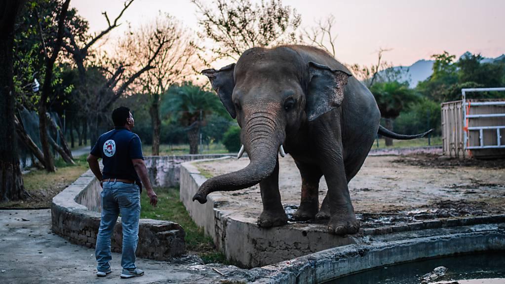 ARCHIV - Tierarzt Amir Khalil steht im Marghazar-Zoo in Islamabad neben Kaavan. Foto: Arne Immanuel Bänsch/dpa