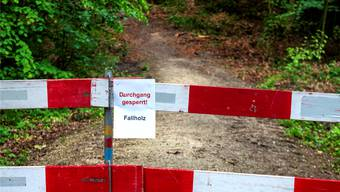 Peter Hartmann, Co-Präsident der Muttenzer Grünen reicht seinen allerersten Vorstoss als Kantonsparlamentarier ein: «Das Bedürfnis der Bevölkerung nach Zugang zum Wald ist gross»