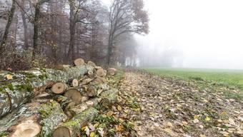 In Bözberg grenzt das Ackerland «Löli» an das bewaldete «Löliholz», wobei «Löli» kein Schimpfwort ist, sondern ursprünglich «kleiner Wald» bedeutet.