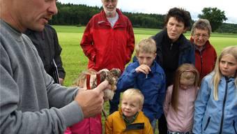 Martin Leuenberger hält den jungen Falken sicher in den Händen. kit