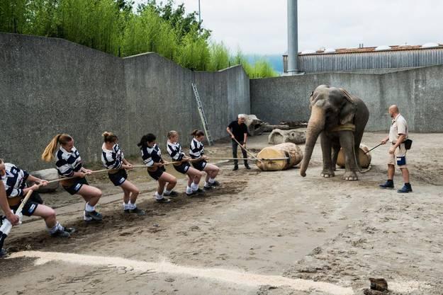 Weiteres Duell: In der Sendung vom Donnerstag gibt es einen Wettbewerb zwischen dem Seilziehclub Mosnang und einem Elefanten im Kinderzoo Rapperswil.