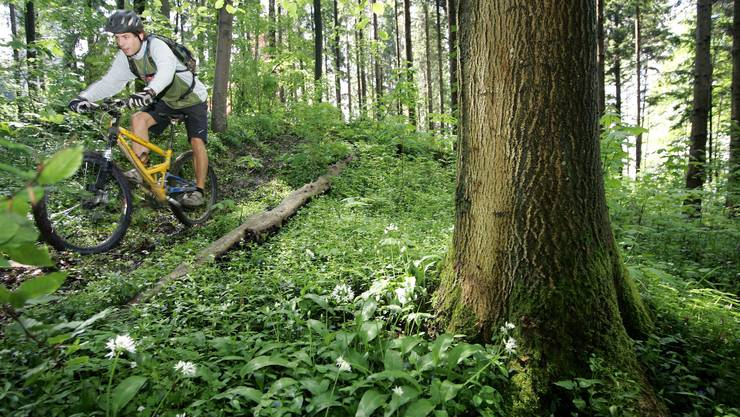 Die Erholungsoase Wald wird – etwa von Bikern – immer stärker beansprucht.