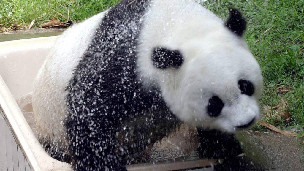 Basi im Jahr 2004 im Zoo von Fuzhou.