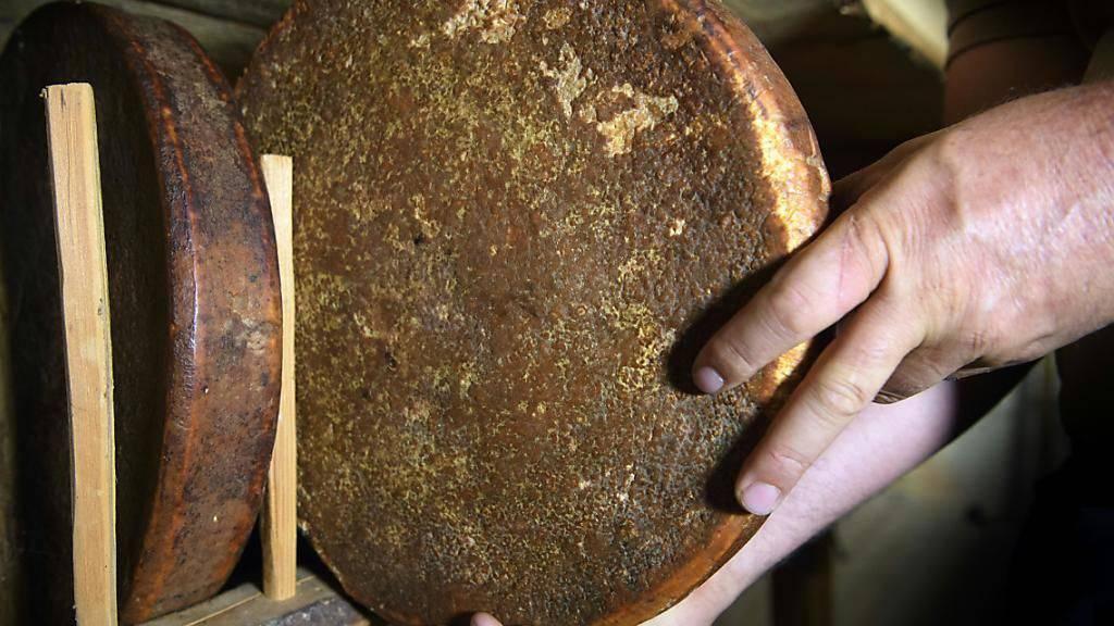 Ein im Jahr 1875 produzierter Käse ist der älteste von insgesamt 72 Laiben im Keller der Familie Zufferey in Grimentz. Trotz des hohen Alters sind sie noch gut beschaffen.