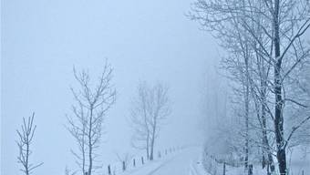 Schneebilder aus dem Limmattal Januar 2013