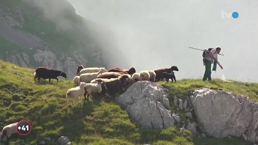 Alpsommer – Ale und die 1'000 Schafe