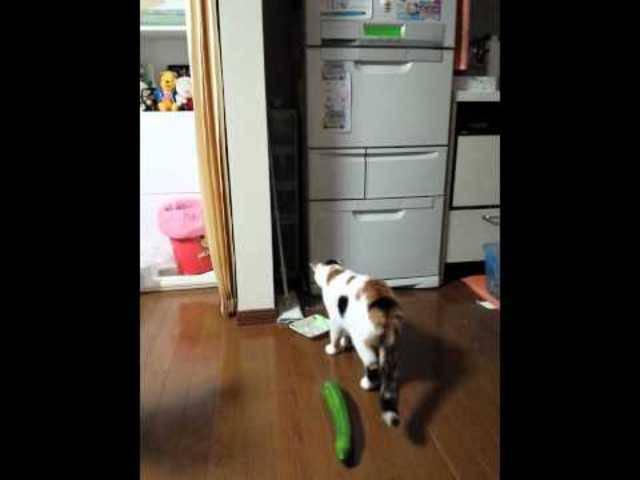 Dieses Katzen-Gurken-Video war der Anfang des Schreckens.