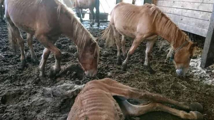 Mit Bildern wie diesem hat eine ehemalige Mitarbeiterin Anklage gegen den verurteilten Tierquäler erhoben. Zahlreiche Pferde waren bis auf die Knochen abgemagert.