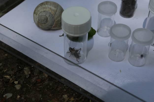 In kleinen Behältern werden die Käfer aufbewahrt.