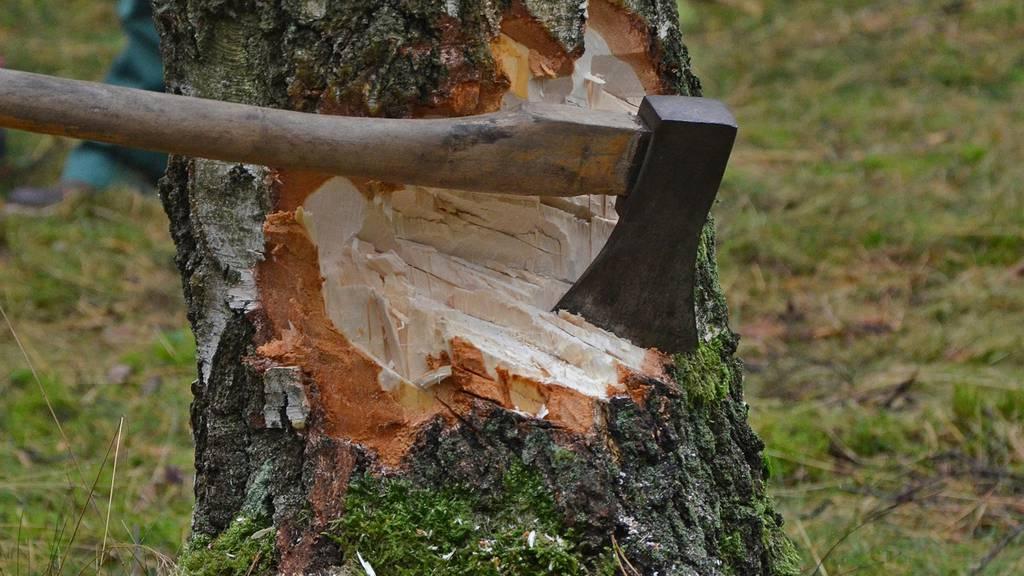 Mehrere Rücktritte wegen vier Bäumen