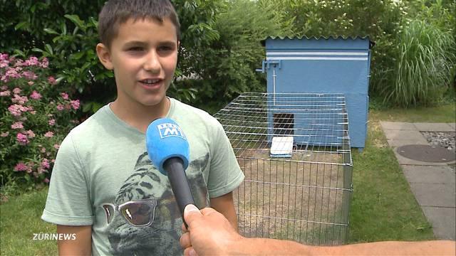 Tier-Drama in Biberist: Hasenbesitzer zeigen grosse Solidarität