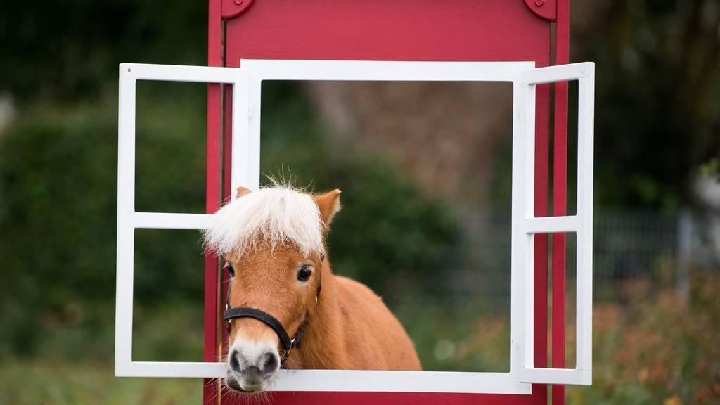 Pony rannte davon und zog Kutsche hinter sich her.