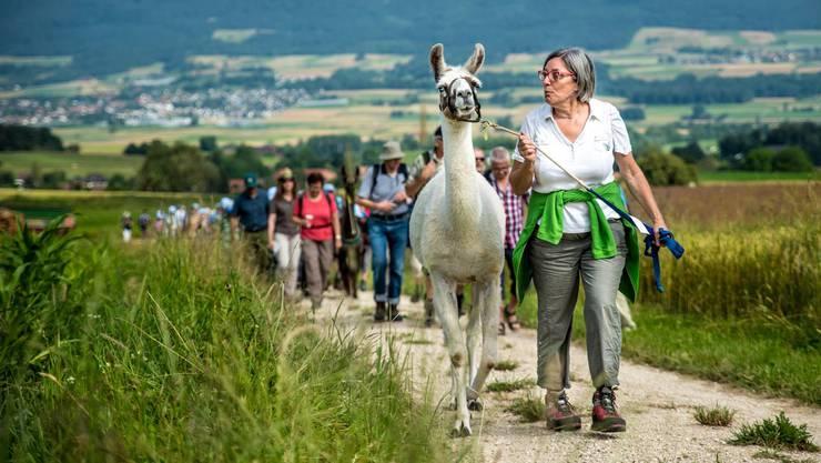 Ganz zur Freude der Mitwanderer: Auf der 3. Etappe werden uns Lamas begleiten!