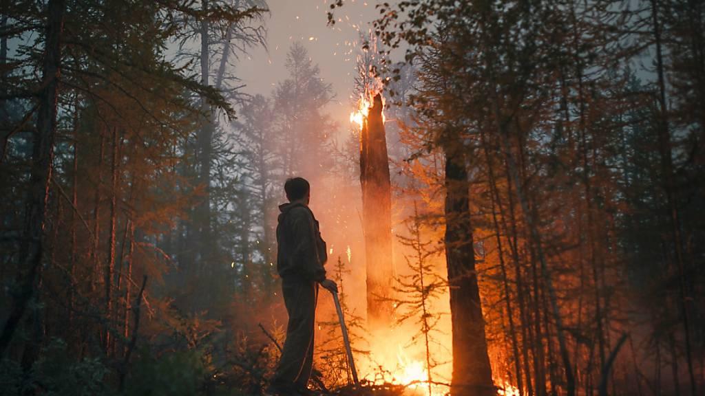 Ein Freiwilliger überwacht ein Gegenfeuer, das die Ausbreitung des Feuers soll. Waldbrände haben in Russland große Verwüstung angerichtet. Allein in der sibirischen Republik Jakutien spricht die Zivilschutzbehörde von Schäden in Höhe von mehr als einer Milliarde Rubel (rund 12,4 Millionen Franken). Foto: Ivan Nikiforov/AP/dpa