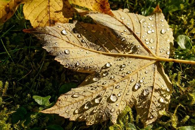 Herbstlicher Morgentau (und mal keine Regentropfen)