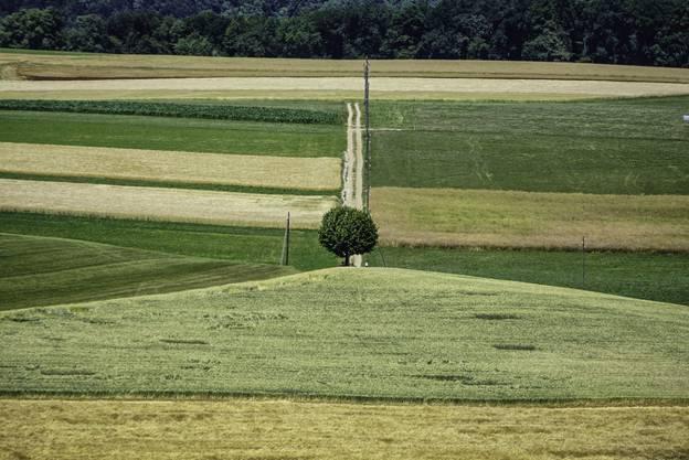 «Ein Lindenbaum in Altenberg bei Wölflinswil»; Hans Böller-Herzog, Wölflinswil.