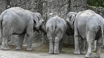 Bald wieder offen: Der Kaeng Krachan Elefantenpark im Zürcher Zoo. Die Menschen dürfen ihn allerdings nur im Einbahnverkehr besichtigen, damit sich niemand zu nahe kommt.