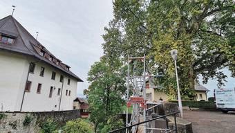 Die Stiftung Biberstein hatte zu entscheiden: Entweder die Mauer wird teuer gesichert oder der Baum muss weg.