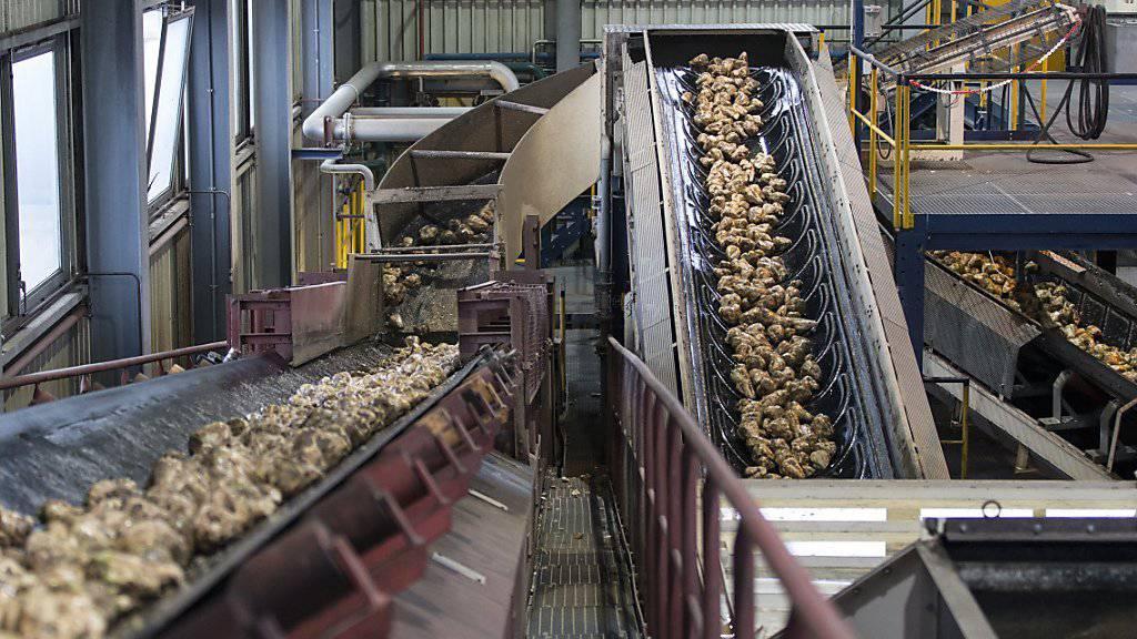 Die Bauern wehren sich gegen Sparpläne beim Bund. Die Preise für Schweine, Milch und Zuckerrüben seien «desaströs», argumentiert der Bauernverband. (Archivbild)