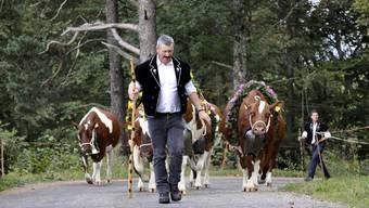 Der Zug der geschmückten Kühe zum Schauplatz ist Höhepunkt der Viehschau.