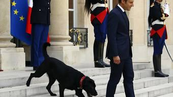 Der adoptierte Hund Nemo bringt in Frankreich manchmal das Protokoll durcheinander. (Archivbild)