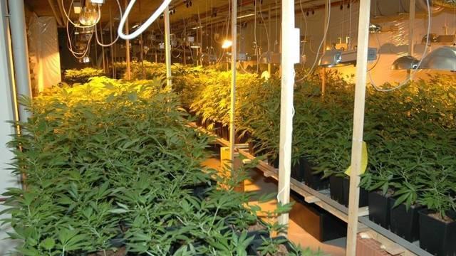 In der Indoor-Hanfanlage stiessen die Polizisten auf rund 950 Pflanzen. (Archiv)