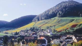 Die in die Juralandschaft eingebetteten Rebberge sind charakteristisch für die Gemeinde Remigen.