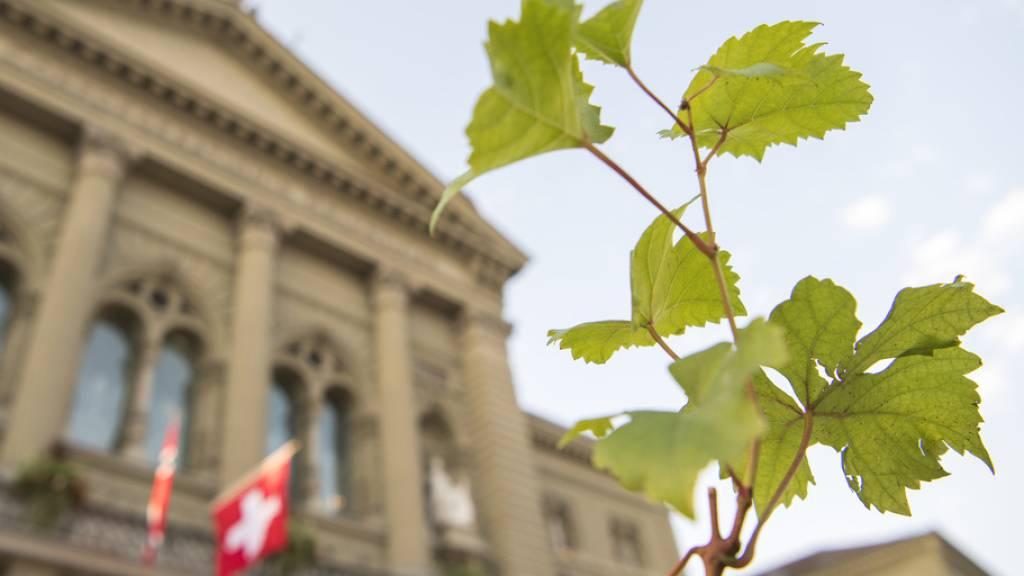 Grüne sind in 80 Gemeinden der Schweiz stärkste Partei