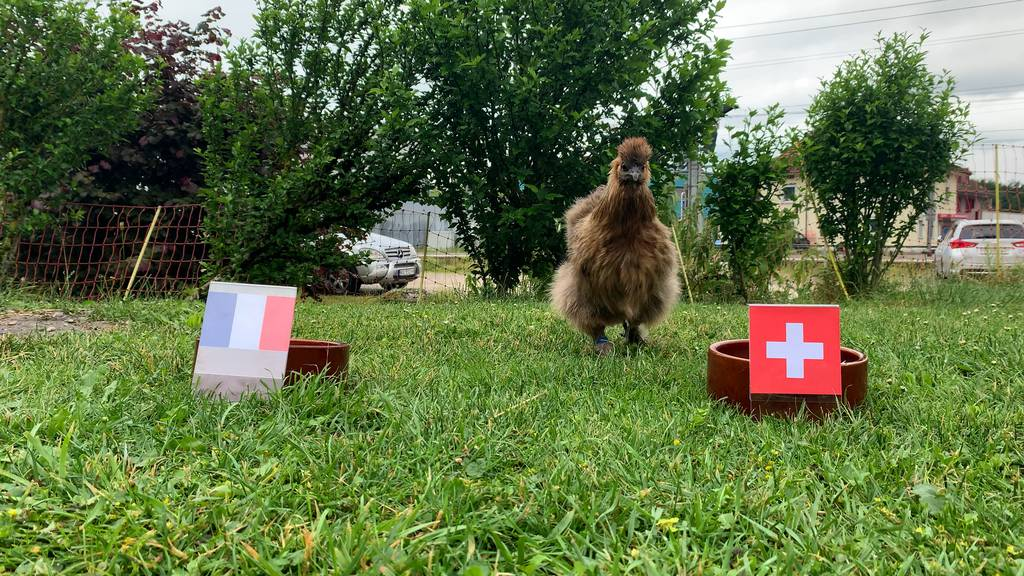So tippt Hannelori für den EM-Achtelfinal der Schweiz gegen Frankreich