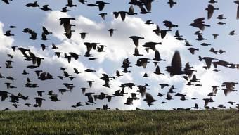 Die meisten Zugvögel sind bereits in den Winterquartieren angekommen (Archiv)