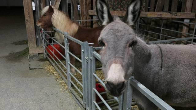 Cosmo, Tömeli und Simone Panier locken die Besucher an den Weihnachtsmarkt der Tierklinik 24.