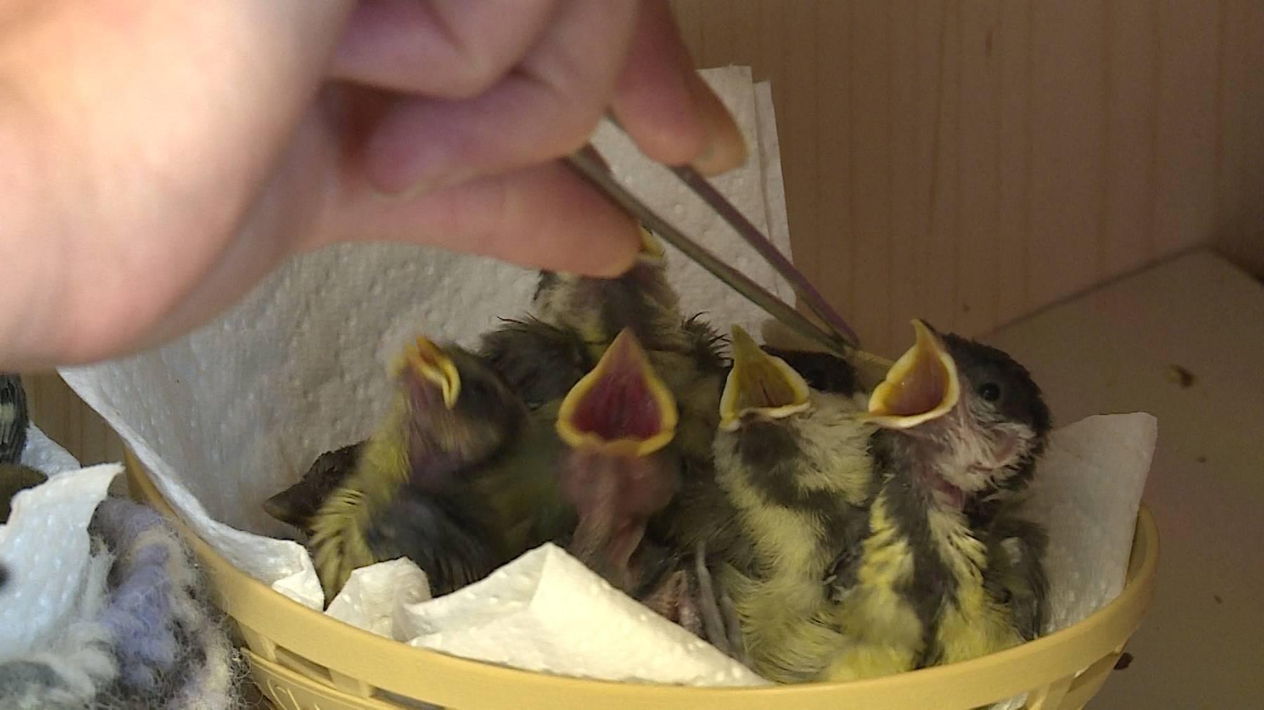 Wildvogel Pflegestation