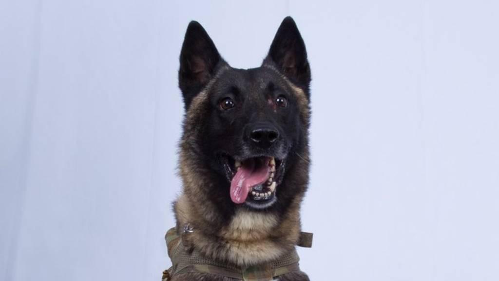 Dieser Militär-Hund ist jetzt in den USA ein Held