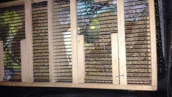 Die geschmuggelten Wellensittiche befanden sich in Transportboxen und waren gut versorgt.