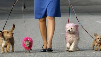 Gerade noch erlaubt: Das Bundesgericht gestattet Spaziergänge mit vier angeleinten Hunden, ein weiterer darf frei laufen.