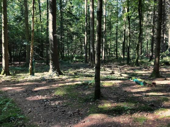 Der Waldboden ist vielfach ziemlich zertrampelt.